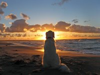 old dog sunset.jpg
